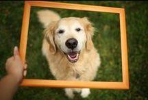 Golden Retrievers lol...plus more animals :) / by Stephanie Garrido