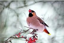 I <3 Birds