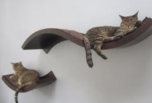 For My Cats / by Barbara Berendt