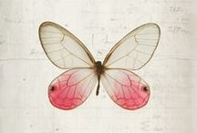 butterflies, bugs and birds