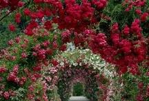 Beautiful Blooms / by Alison Reid