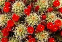 Flora der Maremma