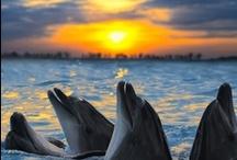 Dolphin / by Tara Langenbrunner