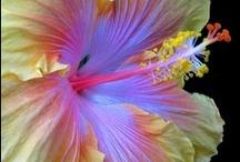Pretty Flowers / by Tara Langenbrunner