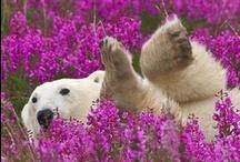 Polar Bears / by Tara Langenbrunner