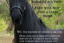 Horses And Issues Concerning Them / Horses - my horses, all horses and the issues concerning horses and their well-being.