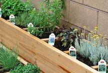 Gardening / Gardening Tips / by Sharisse Dalby
