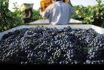Meet the Grapes