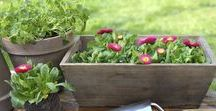 My - Easy Gardening / Tips and suggestions on a favorite pastime of mine. I love to see a garden that is filled with flowers, plants and vegetables and LOVE.
