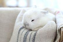 adorable animals / by Bernadette Alcon