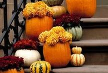 Thanksgiving & Fall Goodness / by Jennifer Janis