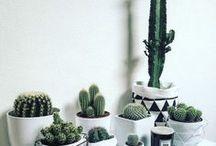 Decoração | Plantinhas