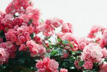 ⇒ flowers