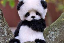 ☁︎ panda