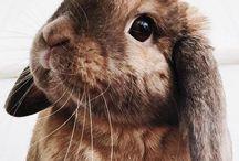 ☁︎ bunnies
