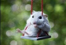 Dieren / Tips en ideeën rondom Dieren  en dierentuin  / by Juf Marita