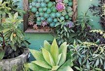 Garden / by Audrey Kitching