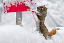 Valentijn / lentekriebels