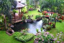 Gardens & Courtyards / My garden is my haven, finding beauty in things created by God. Ecletic, tranquil & hidden surprises