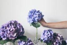 Flowers + Gardens  / by Anne Sportun Fine Jewellery