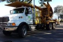 Spade ready for todays Job in San Francisco, Bay Area / Tree moving and Boxing