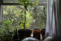 Homesteading / Homesteading ideas and skills for a more self sufficient happier you....