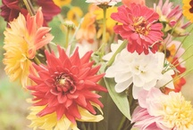 Blommen, groot en klein en altijd fijn  / by SchoneVrouw Netherlands
