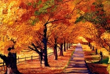 Glorious Fall Colors 1 / by Becky Schneider-Hauk