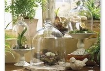 Cloches, Apothecaries & Domes