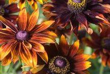 Flower Garden / by Becky Schneider-Hauk