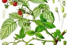 Herbs & Health / by Debbra W