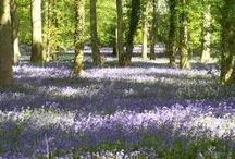 Laura & Kamal / May 2013 -  Natural, woodland, 'just picked'.  Bluebells, ferns, moss.