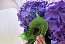 Our Wedding Flowers- Purple Hydrangeas / My favorite flower is the lilac, but since our wedding was in the Boston area in August, they were impossible for our florist to get for us. Another flower that has a similar look & style is the purple hydrangea (a large head made up of many small blossoms). Since hydrangeas were both local & in season, so they wound up being a budget friendly option. The only concern was that the August heat might make some of the flowers wilt, so the boutonnieres & the flowers on our cross were silk. / by Terri Deeds