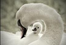Vogelpatronen / by SchoneVrouw Netherlands
