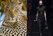 Wild. / Animal print. I had to do it. ;) Leopard. Cheetah. Roar.