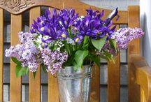 Lilacs & Iris / by Linda Edmonds Cerullo
