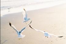 birds. / by Asa Lindstrom