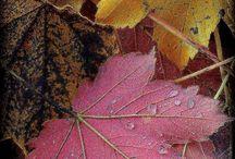 Fall / by Lynda Swanson