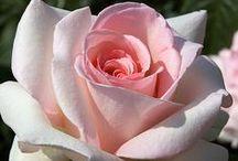 Beautiful Flowers I Love