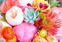 flowers / by Marielle Verhaegh