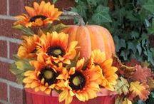Fall Festivities / ideas for Halloween/Thanksgiving/autumn / by Barbara LaVista