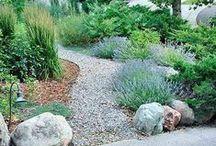 Garden and Homesteading / by Sara Turk