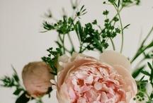 { blooms }