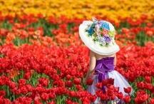 { spring }