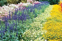 Gardens That Inspire Me / by Donna M. Cervelli