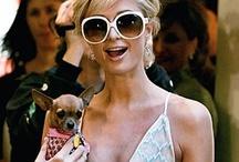 Les Stars et leurs Chihuahuas / Découvrez les célébrités avec leurs chihuahuas