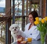 Pet-Friendly Napa Valley / The valley showcases its generous pet-friendly hospitality, as many of the valley's wineries, restaurants, and lodging establishments provide extra special treats for four legged friends.