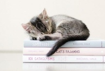 Cats and Kittens / by Donna M. Cervelli