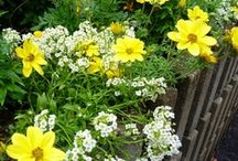 Annual Plant Favorites / by Donna M. Cervelli