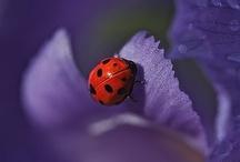 Purple / Milton Erickson's favourite colour!